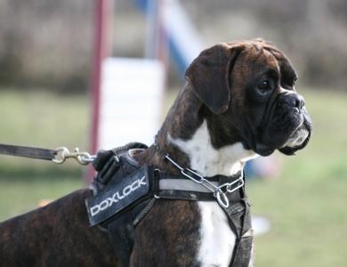 club canin de pourrieres